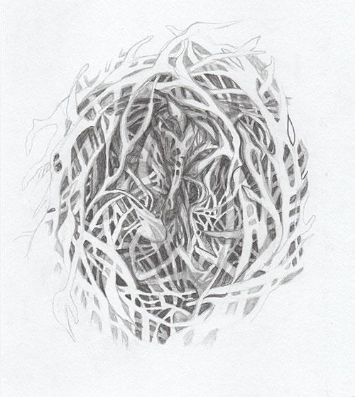 Boukje van Iperen, Nest, grafiet op papier, 19 x 17 cm, € 125,-