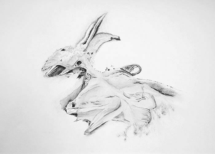 Remko Leeuw, Lepus hors d'oeuvre, grafiet op papier, 29,7 x 42 cm, € 350,-