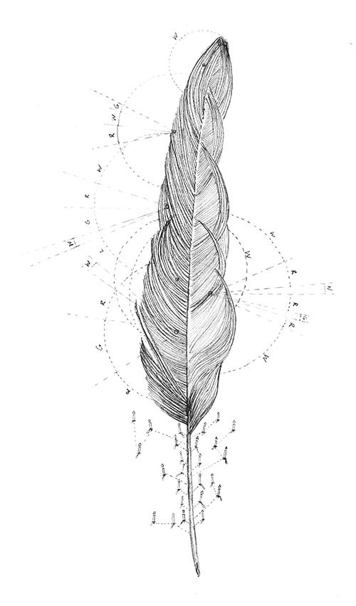 Ellen Palsgraaf, Rundvick, potlood op papier, 32,5 x 17 cm, € 150,-