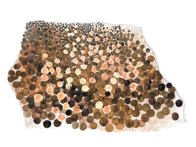 Laura Scheringa - Aardappelenveld Oostindische inkt, gouache en potlood op papier 25 x 38,1 cm € 225,-