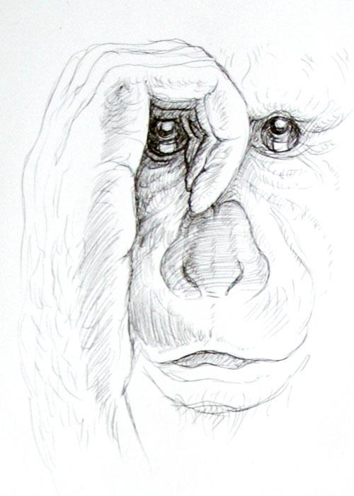 Mitsy Groenendijk - Apenportret pen op papier 21 x 14,5 cm € 350,-