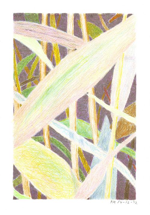 Rik Hagt - Riet #2 kleurpotlood op papier 21 x 15 cm € 175,-
