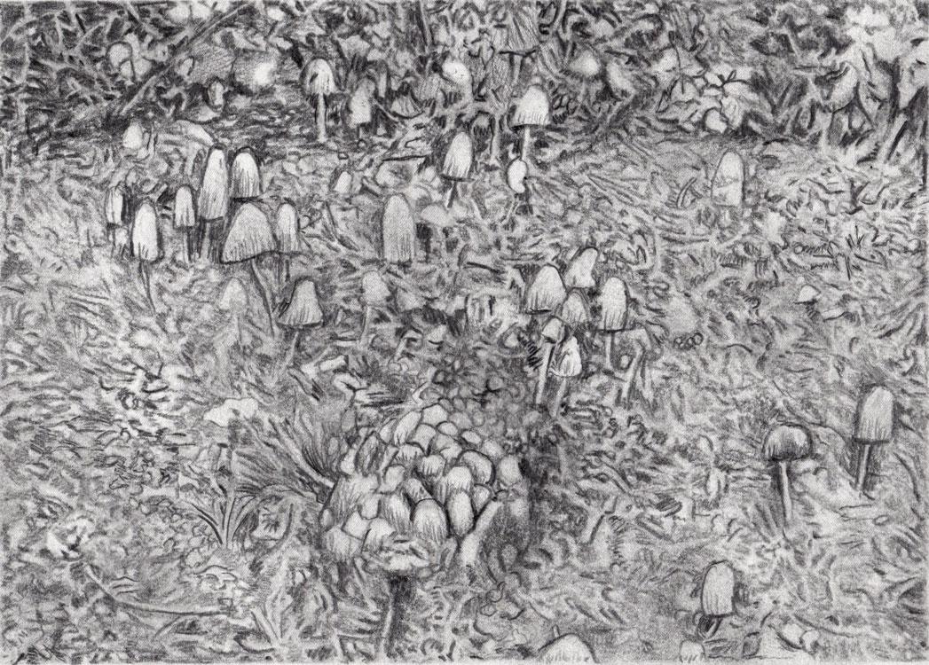 Gam Bodenhausen – Fungos Forest